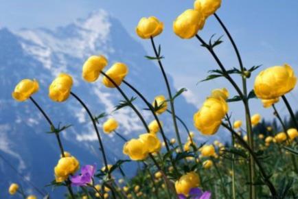 scoppia-la-primavera-in-montagna-_it_